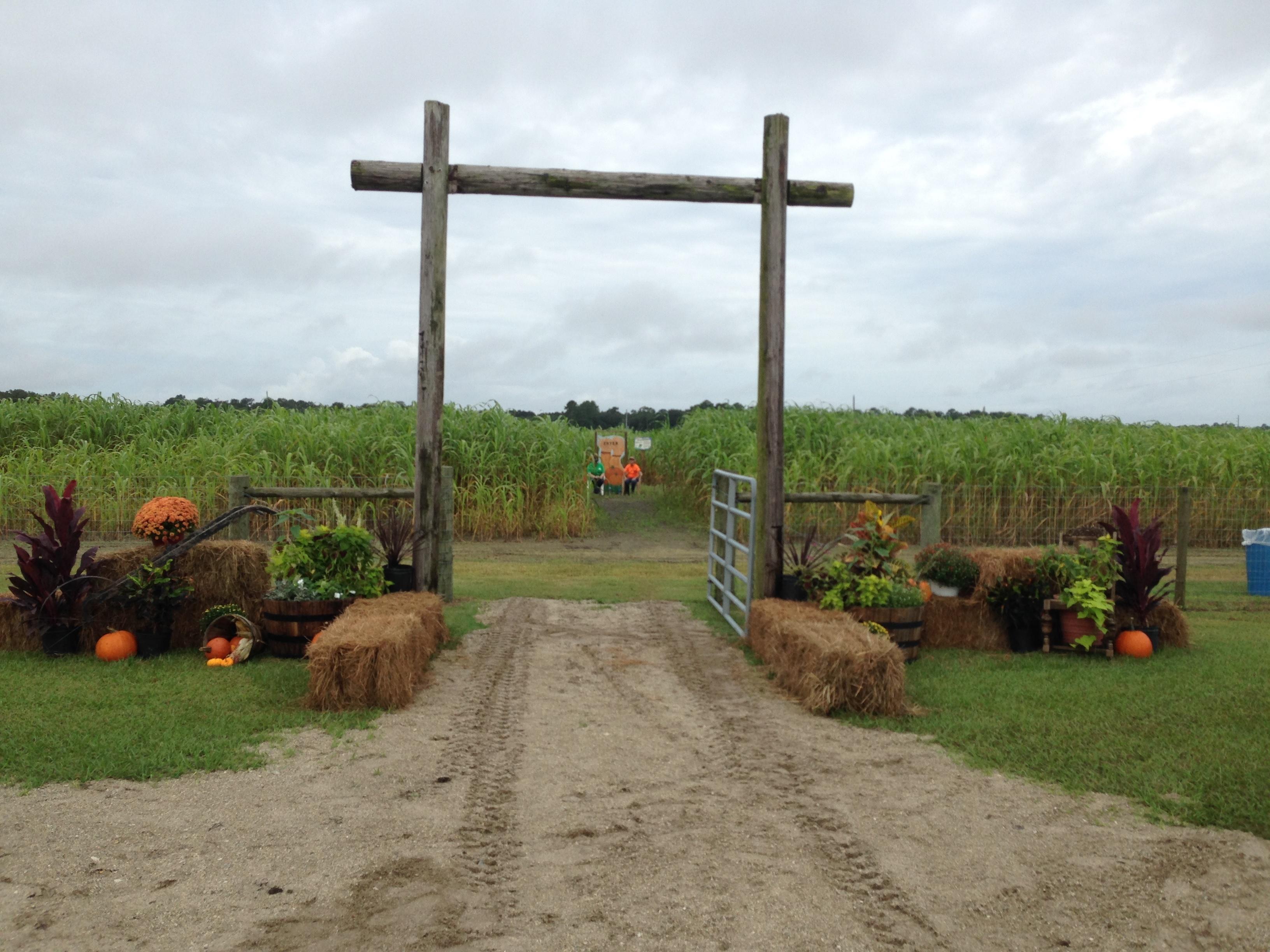 sykes-corn-maze